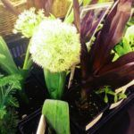 Plant Fair at Telegraph Hill Centre